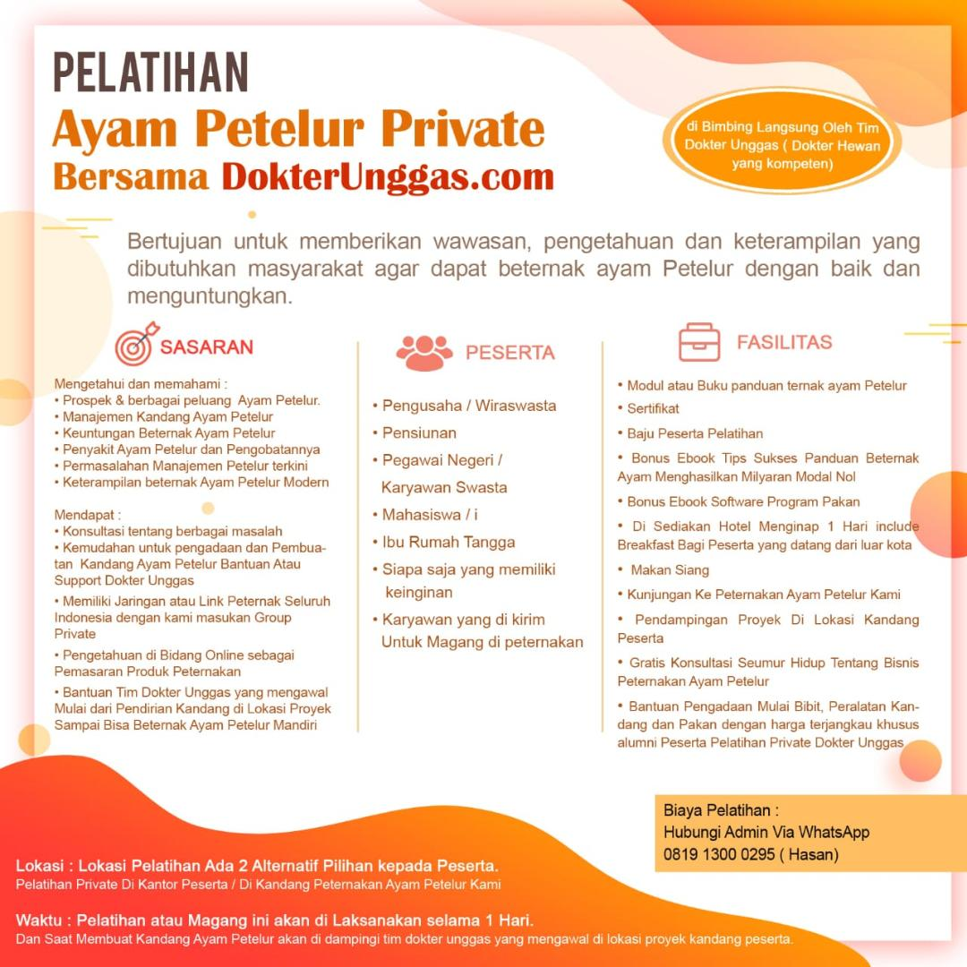 Pelatihan Private Ayam Petelur